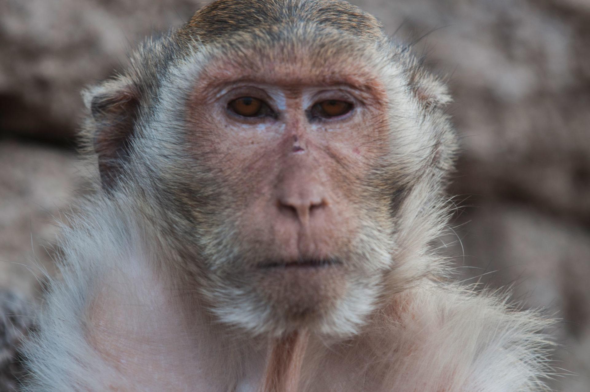 DIe in the City, Macacos